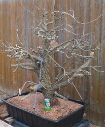 Tree # 2
