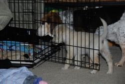 Piper checking out her crate