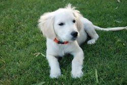 Piper 16 weeks
