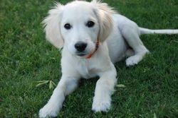 Piper posing at 16 weeks