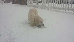 Reggie Biting Snow