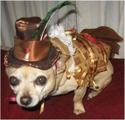 Carmen the Steampunk Chihuahua