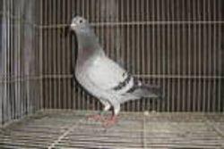 1st bird