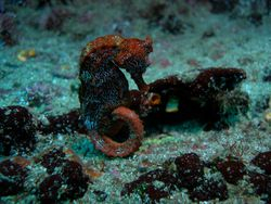 Lonely Seahorse