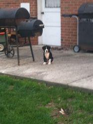 Sitting in the Backyard!