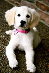 Lilly Posing.