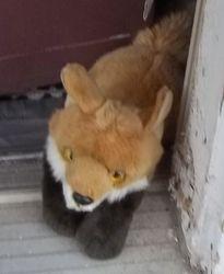 Foxy, Canid Extordinaire