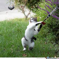 cat v mouse
