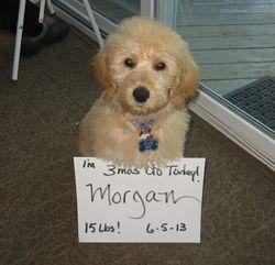 Morgan, 3 mos old,Jack & Kasey's pup