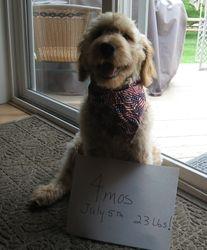Morgan 4 mos old, Jack & Kasey's pup