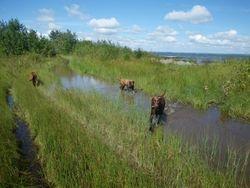 Trails under water