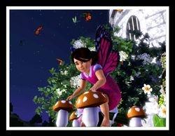 Where Fairies Roam