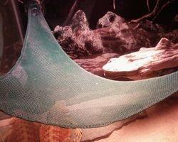 Big hades hammock