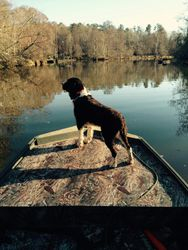 Ruger loves riding in the boat!