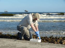 Collecting a wrack sample