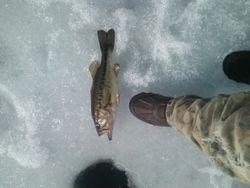 hard water bass
