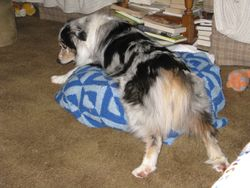 "Tia ""stuck"" on the footstool"