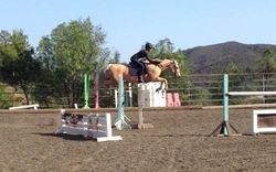 Apollo The Jumper Pony
