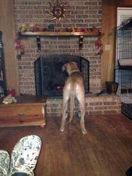 Zeus Fireplace