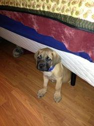 Zeus playing hide and seek.