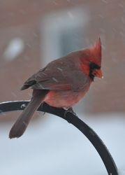 Mr. Cardinal... where's the seed?