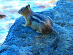Great shot of a beutiful chipmunk!
