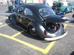 Nice black and black bug