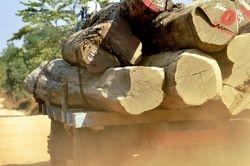 logging on Mt Victoria