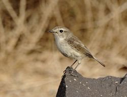 female Canary Islands Chat