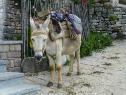 domestic donkey outside ancient church