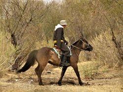 horseman near Tool River