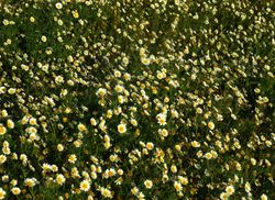 flower meadow near La Oliva