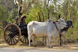 local transport at Bagan