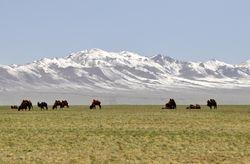 Altai Mountains from the Gobi