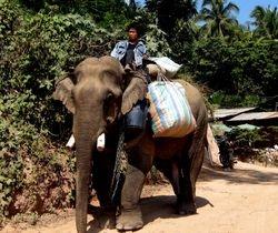 working elephant