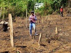 deforestation on Peleng