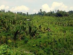 typical habitat at Sandakan