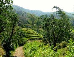 base of Mt Lompobattang