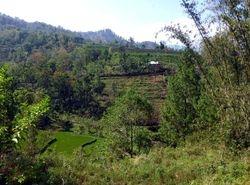 Malino, Sulawesi
