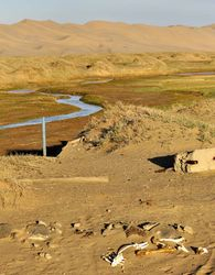 river in the Gobi