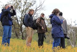 Standing in a Bulbine Lily meadow