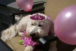 Roxy turns 4!