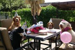 Roxy's 4th Birthday Party