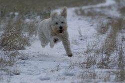 Why walk when you can run!
