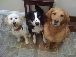 Roxy with her 2 sisters