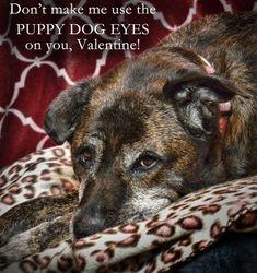 Gilly's Valentine
