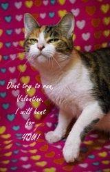 Aya's Valentine