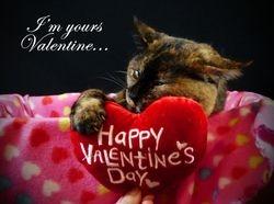 Kit's Valentine