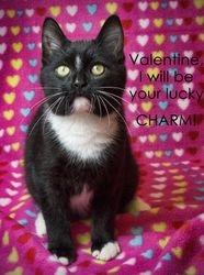 Neville's Valentine