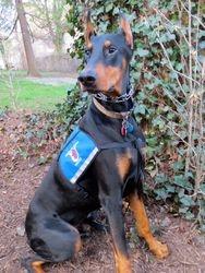 Kenta's Therapy Dog United Photo